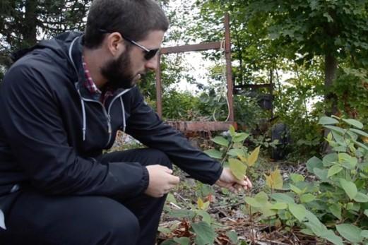 Les plantes envahissantes – Capsule 2