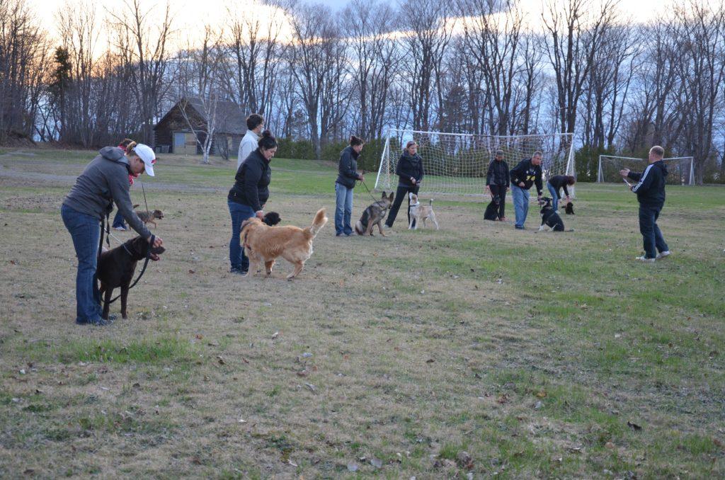 Un éducateur suggère de réformer le milieu canin