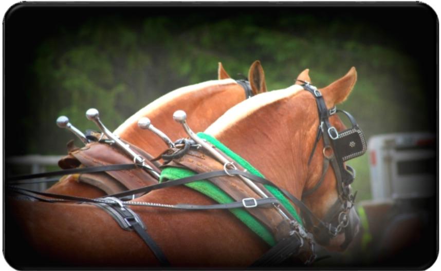 Quatrième Tire de chevaux à Saint-Gabriel-Lalemant