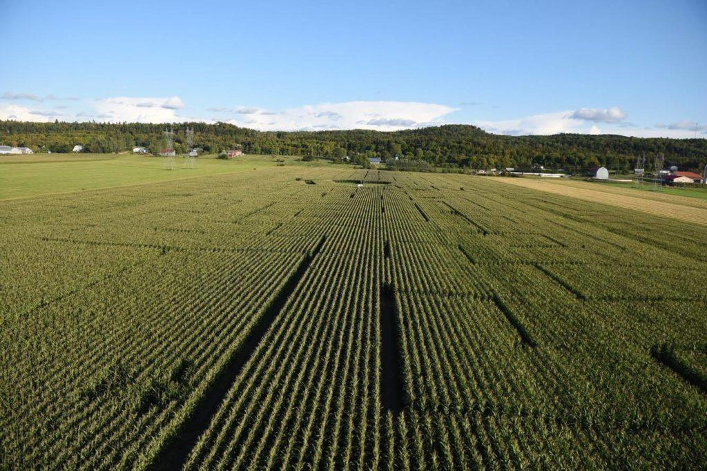 La Pocatière aurait finalement le plus grand labyrinthe au monde