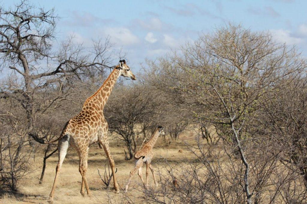 Un safari-photo en Afrique : un rêve réalisable