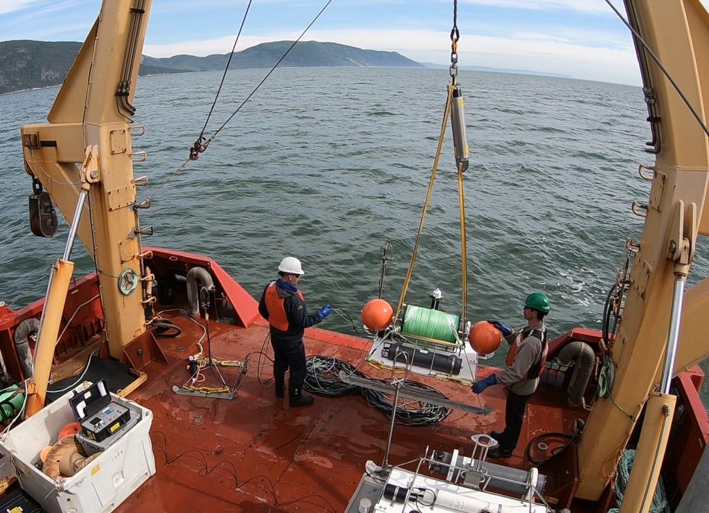 Évaluer l'impact des bruits sous-marins sur le béluga