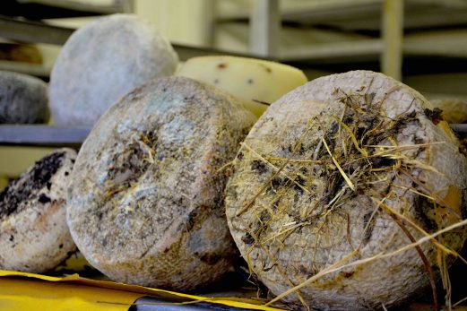 Toscane : Découvrir le Val d'Orcia en dégustant du Pecorino