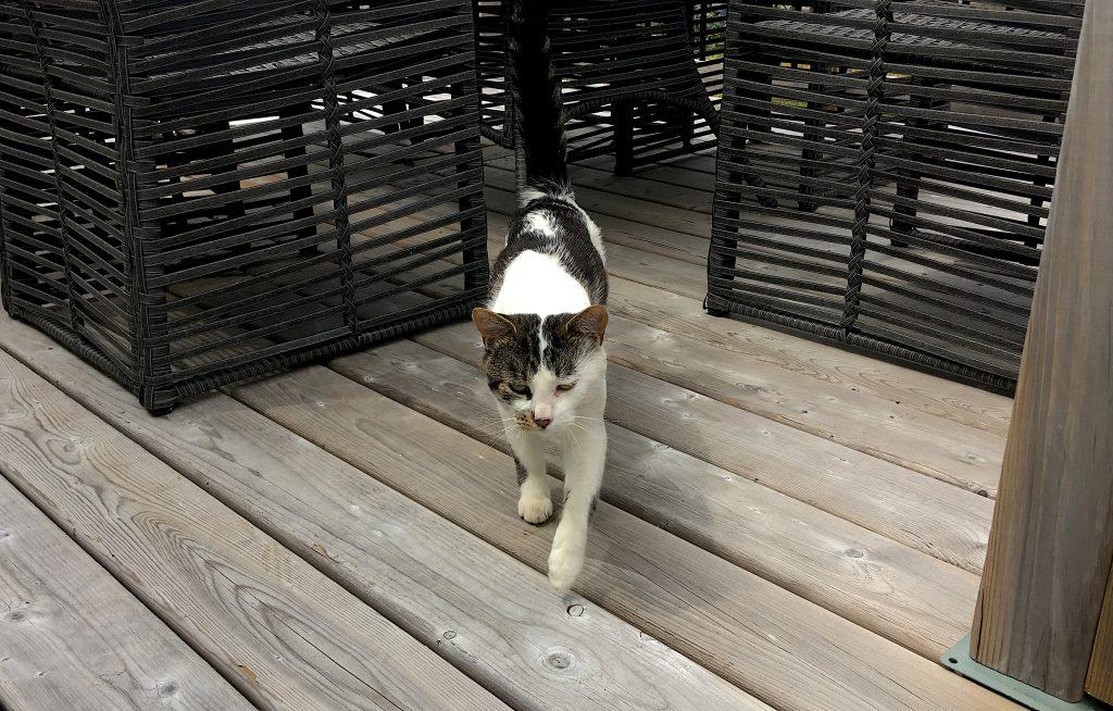 Éditorial : Gustave qui erre sur mon balcon