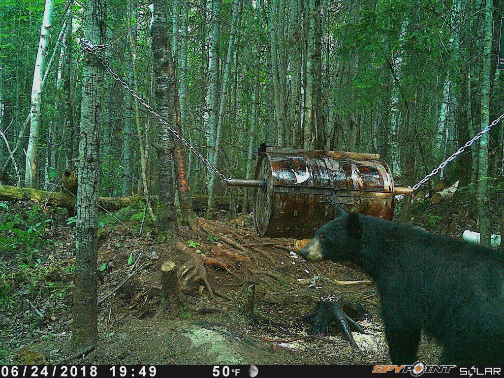 Baril conçu pour la chasse à l'ours
